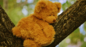 Stuffed Bear up in a tree